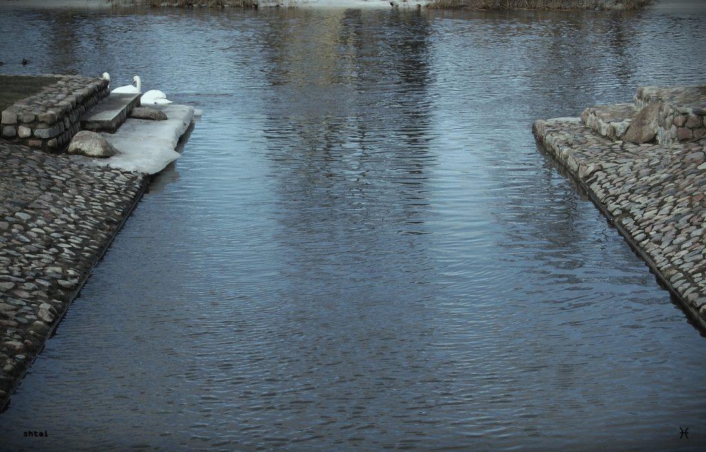 The Yellow Swan Will Not Return