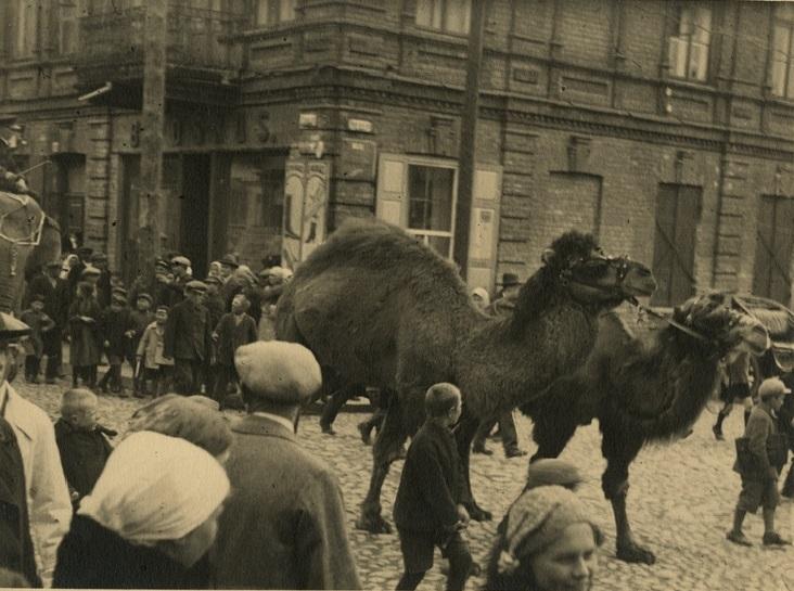 Gerardas Bagdonavičius. Cirko kupranugariai